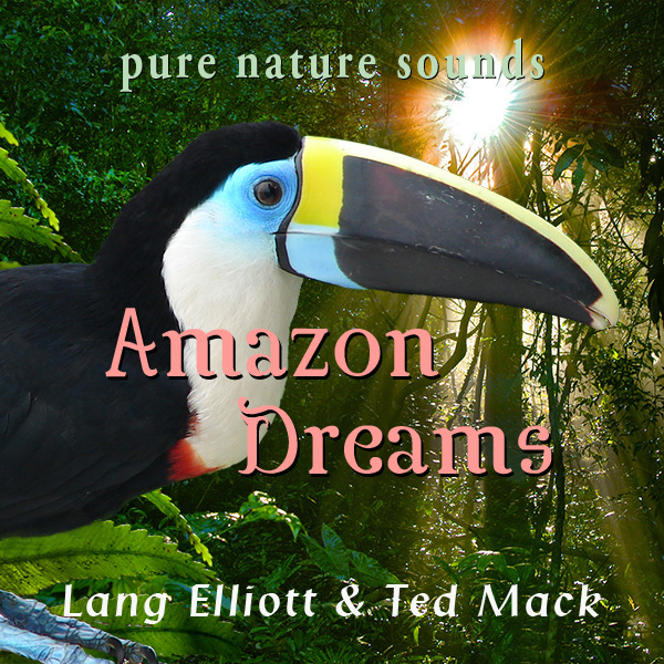 Amazon Dreams 600px