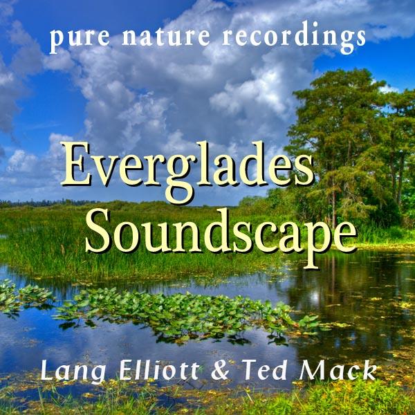 Everglades Soundscape 600px