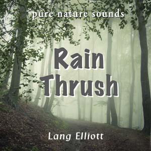 Rain Thrush 300px