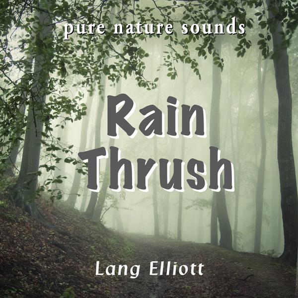 Rain Thrush 600px