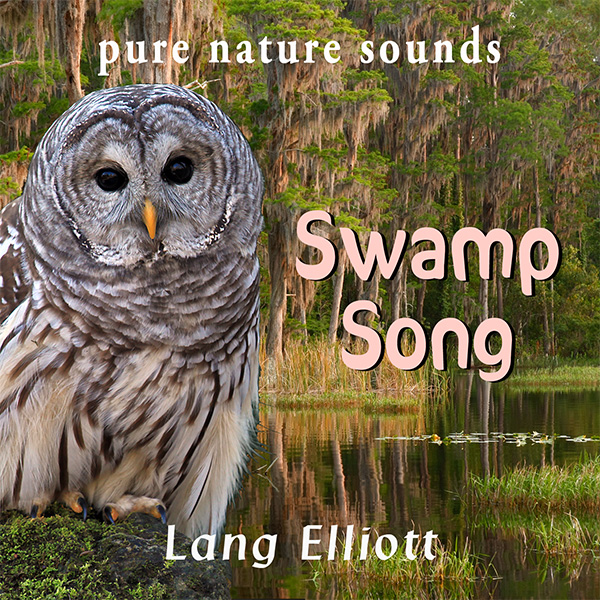 Swamp Song 600px