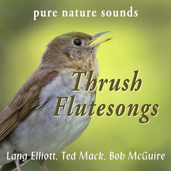 Thrush Flutesongs 600px