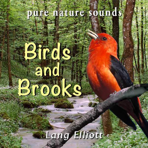 Birds and Brooks - featured image
