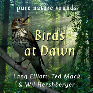 Birds at Dawn - cover art