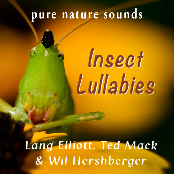 Insect Lullabies - featured image