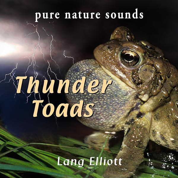 Thunder Toads - cover design